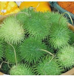 Concombre des Antilles