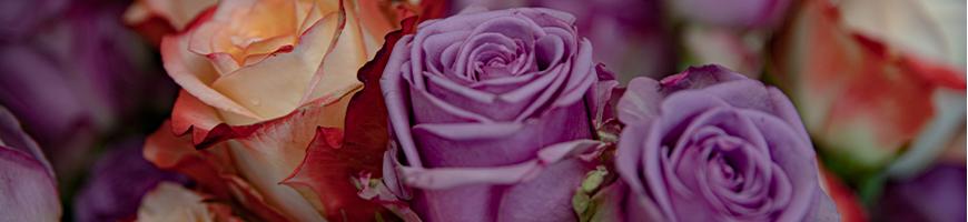 Notre sélection de bouquets.